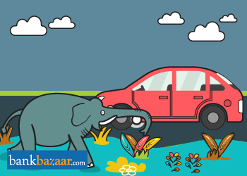 Car Insurance For Animal Attack